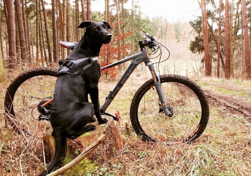 chien vélo en foret
